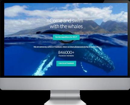 online shop maui web design jawzrsize